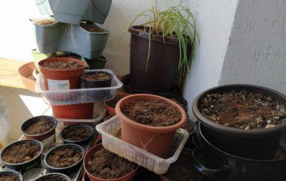 Bytový zahradník 2. Co budeme potřebovat?